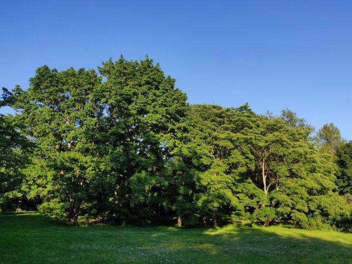 Puiston upeita puita