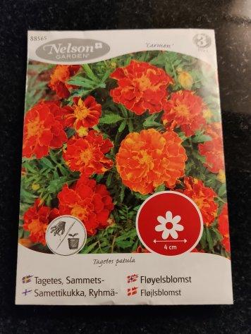 Nästä siemenistä kasvoi upeat kukat parvekkeelle.
